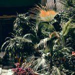 У Чернівцях завершують ремонт оранжереї ботанічного саду