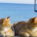 Всесвітній день кота. Підбірка атмосферних фото чернівецьких та одеських кішок