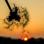 Вночі гроза, а вдень спека. Прогноз погоди у Чернівцях на 2 серпня