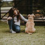 У таборі в буковинських Карпатах діток з особливостями розвитку реабілітують собаки-«терапевти»