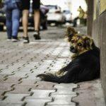 Чернівчан запрошують на марш за права тварин