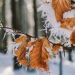Синоптик попереджає про заморозки на Західній Україні