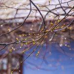 Справжня весна. Коли на Буковину прийде потепління. Фото