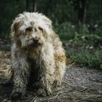 У Чернівцях на Гравітоні масово отруїли собак