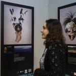 У Чернівцях презентують виставку «Еволюція: маски Торресової протоки»