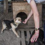 Вірний друг та охоронець. Які тварини у Чернівцях чекають на господаря. Фото
