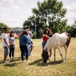 Волонтери з-за кордону допомагають чернівчанці, яка приручила 10 коней. Фото