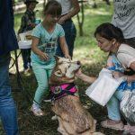 У Чернівцях проведуть артпікнік і терапію з собаками
