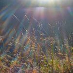 Чернівецькі синоптики розповіли, яким буде листопад