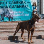 У Чернівцях відбудеться акція на захист тварин