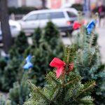 У Чернівцях уже торгують ялинками та новорічними прикрасами. Фото