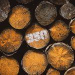 Уряд затвердив порядок електронного обліку деревини