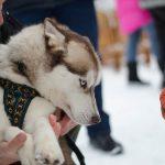 Парламент ухвалив законопроєкт, який захищатиме права тварин
