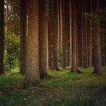 Мільйон дерев за добу: Буковина долучиться до проєкту «Озеленення України»
