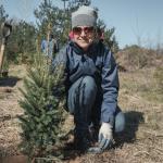 В Україні висадять 5 мільйонів дерев за добу