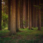Мільйон дерев в Україні у березні не висадять через карантин